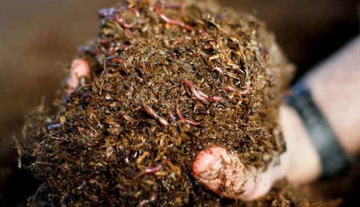 Vermicompost Soil Fertilizer