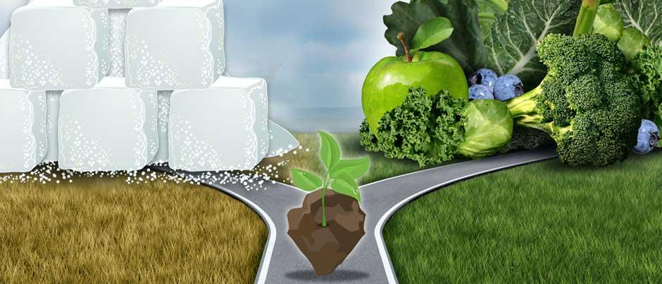 Thanks to Junk-Food Fertilizer, Supersized Produce Is Often Nutrient Deficient