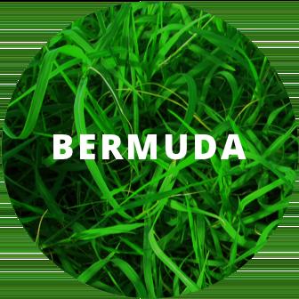 Bermuda sod installation east cobb.