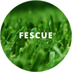 If you have fescue, it's time to aerate the lawn.