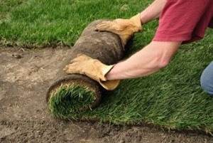 Is fall the best time of year to lay sod?