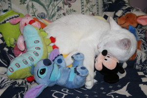 Kimba Napping With Mickey Mouse