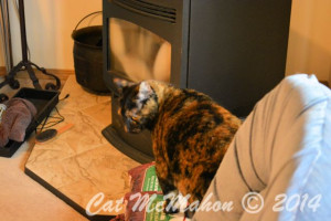 Abby's Secret Identity CatsStoriesDotCom 4