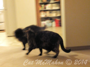 Abby's Secret Identity CatsStoriesDotCom 7