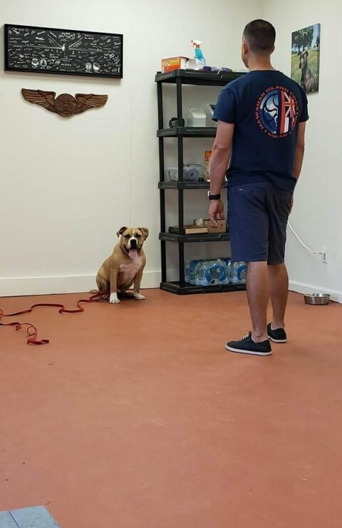 San Antonio dog trainer San Antonio dog boarding San Antonio dog training San Antonio doggy daycare San Antonio dog obedience classes