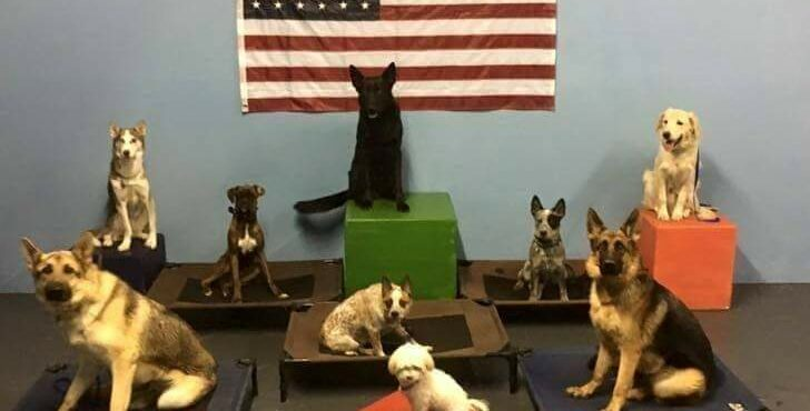 Group Dog Training San Antonio