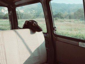 2015-06-Life-of-Pix-free-stock-photos-dog-car-roadtrip-santalla