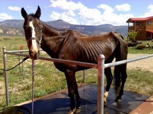 Lady's Story - Dust Devil Ranch Sanctuary for Horses