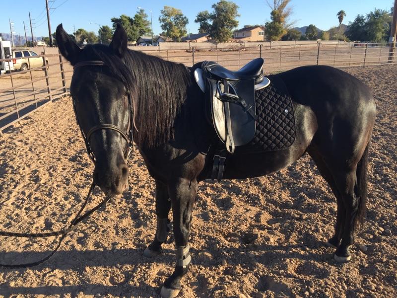 Horse Adoption Dust Devil Ranch Sanctuary for Horses