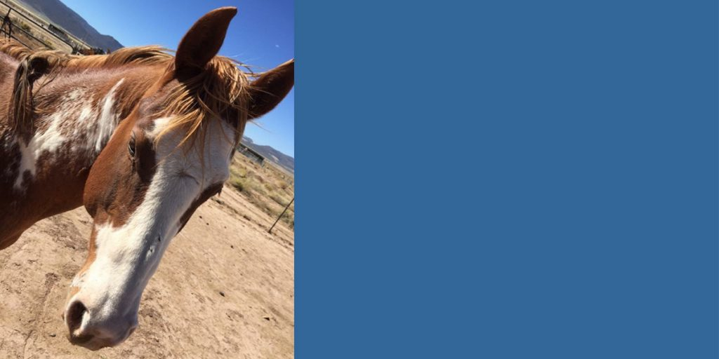 Horse Adoption Dust Devil Ranch Sanctuary for Horses