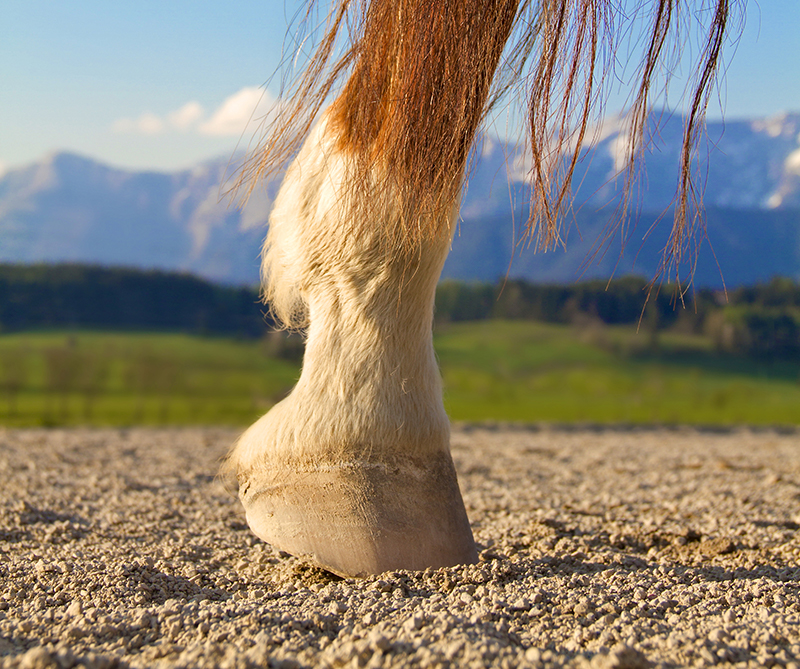 Horse Foot - Proper Basic Foot Care in Horses
