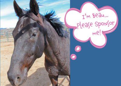 Beau - Dust Devil Ranch Sanctuary for Horses