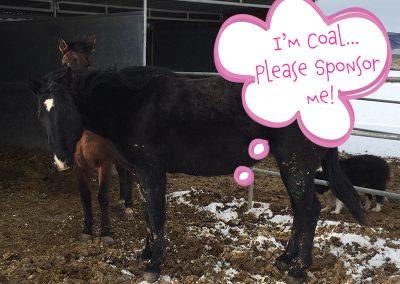 Coal - Dust Devil Ranch Sanctuary for Horses