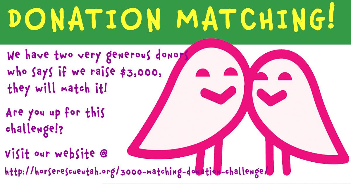 $3000 Donation Match - Dust Devil Ranch Sanctuary for Horses