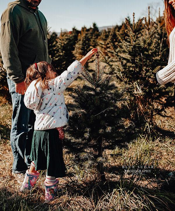tree farm annual tradition