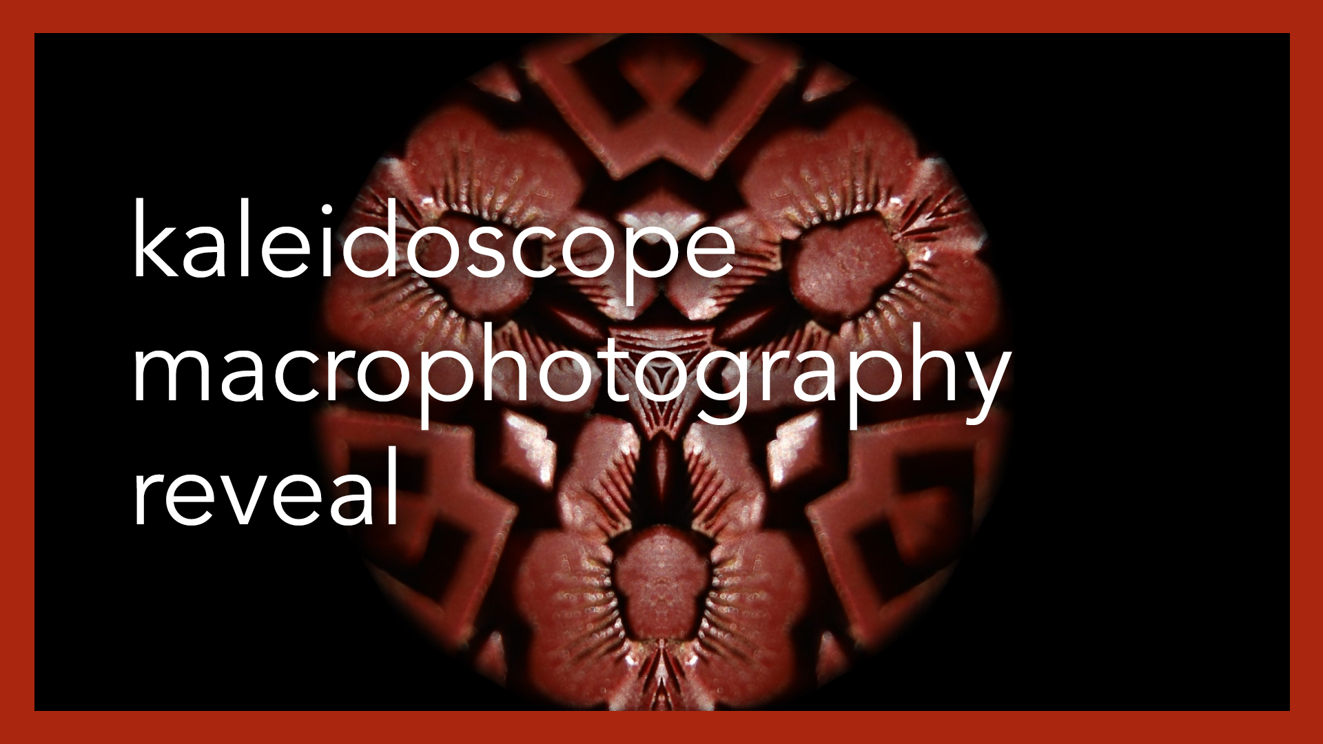 Kaleidoscope Macrophotography Reveal