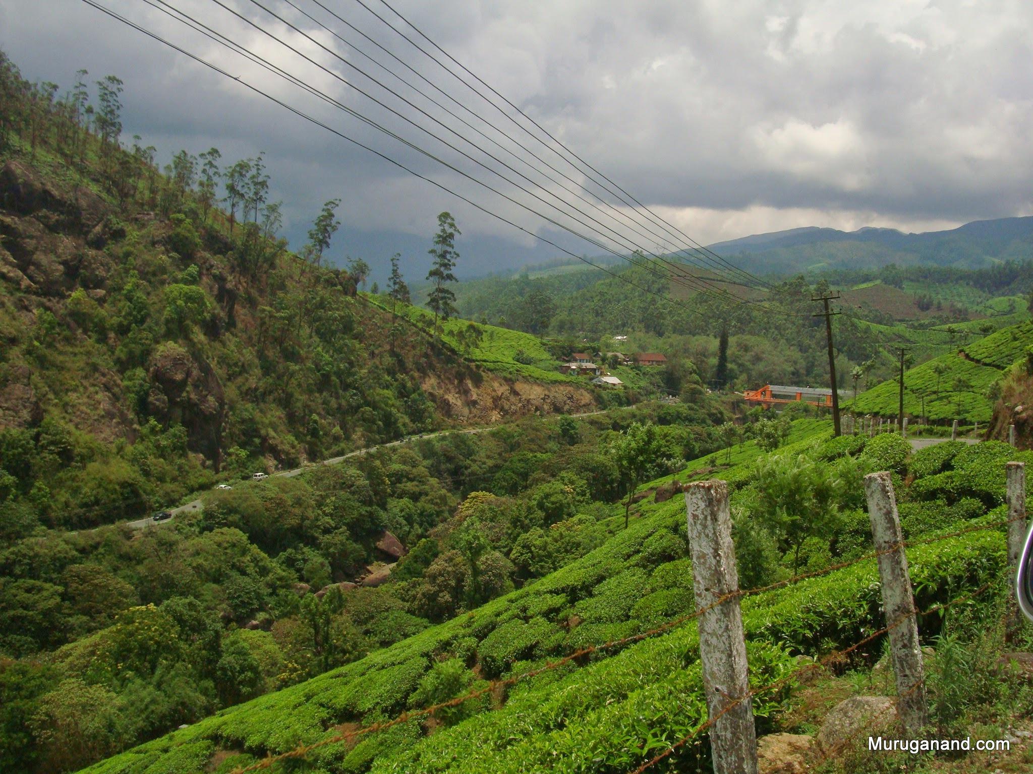 Tea plantation signals Munnar vicinity