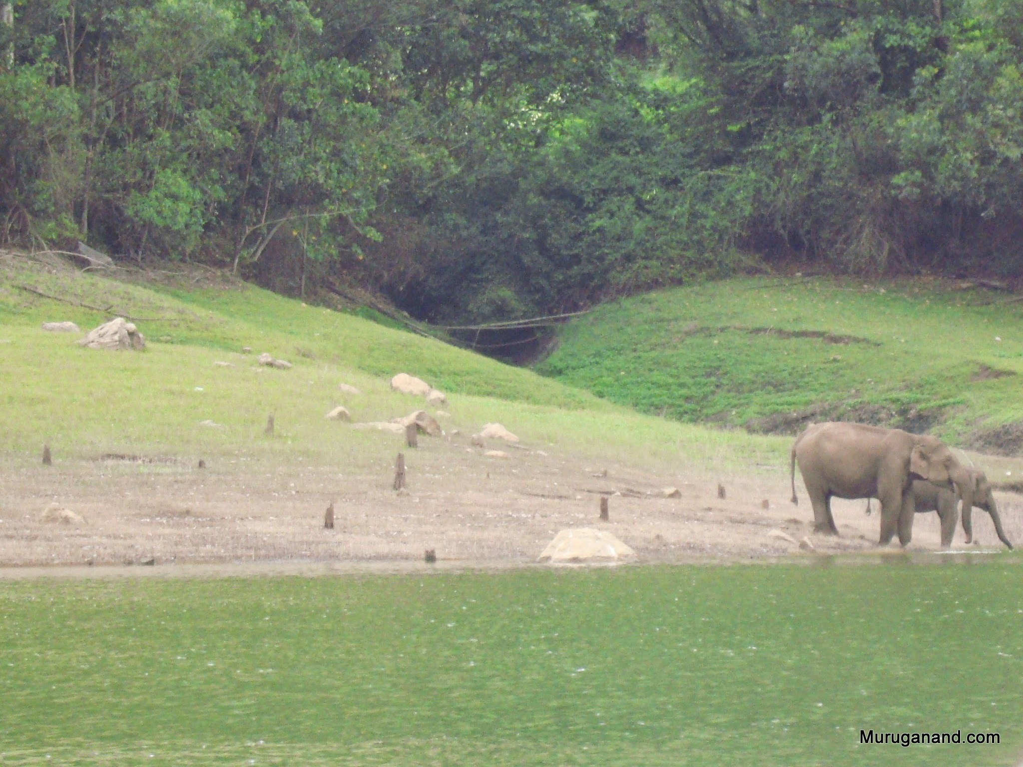 Cited elephants drinking water in the lake