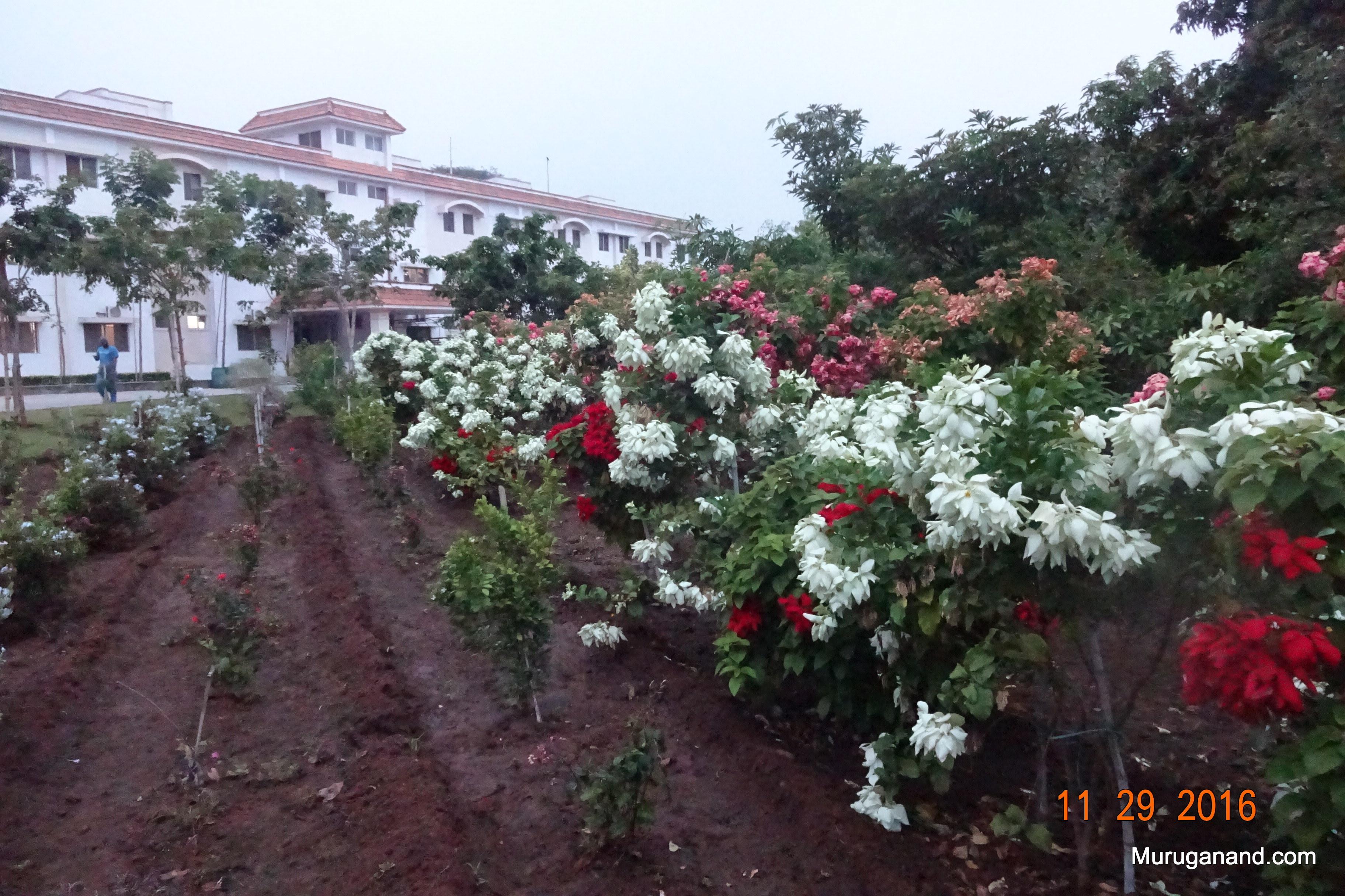 Flower garden has various colorful plants.