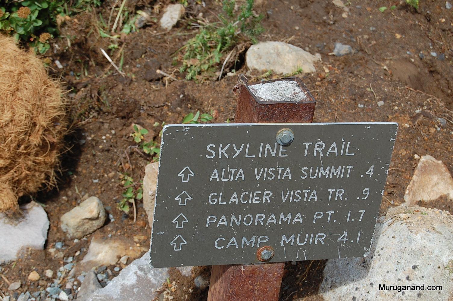 I took the alta vista/skyline trail