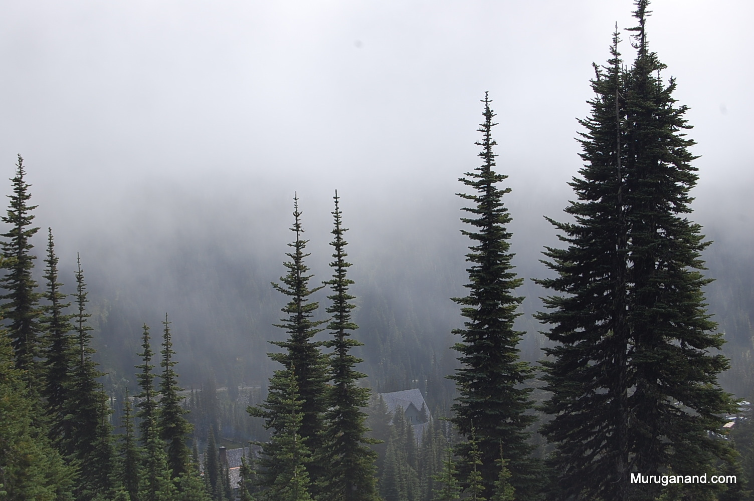 The trees, mist and the mountain make it a holy place