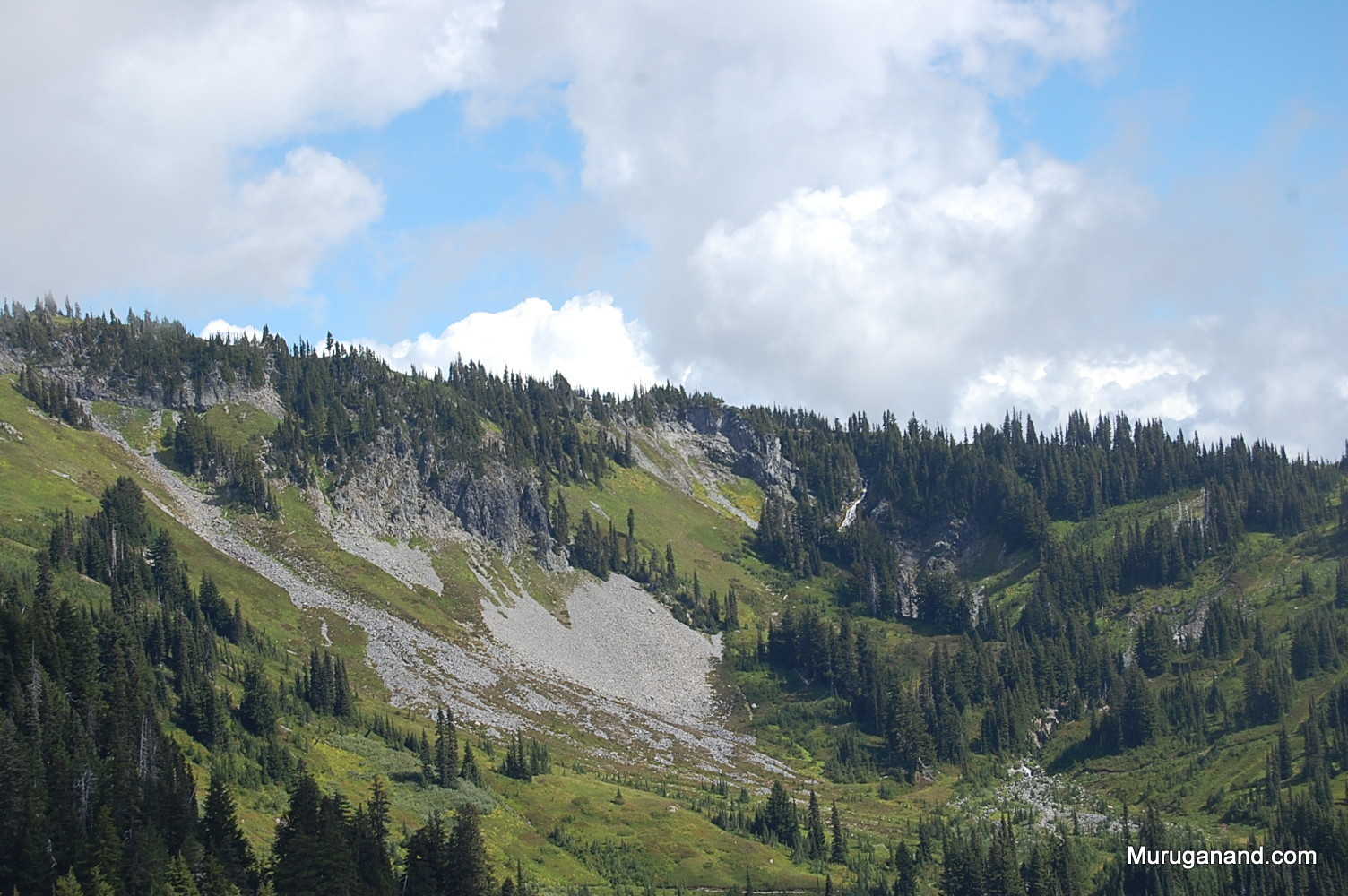 Beautiful slope/ valley with subalpine fir