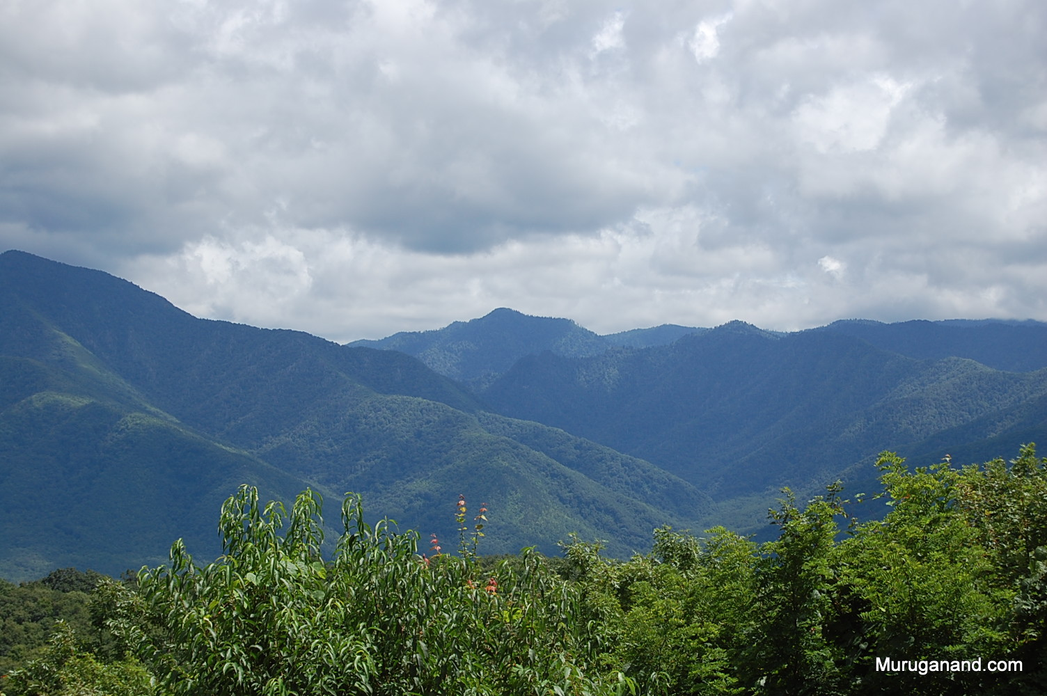 Location of actual Clingman's dome (at the center way back)