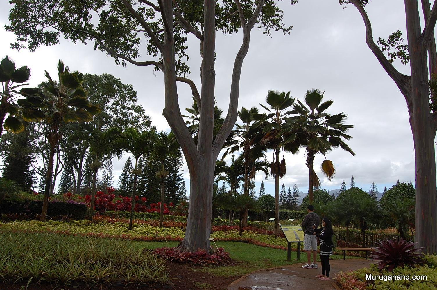 Dole Plantation (O'ahu)