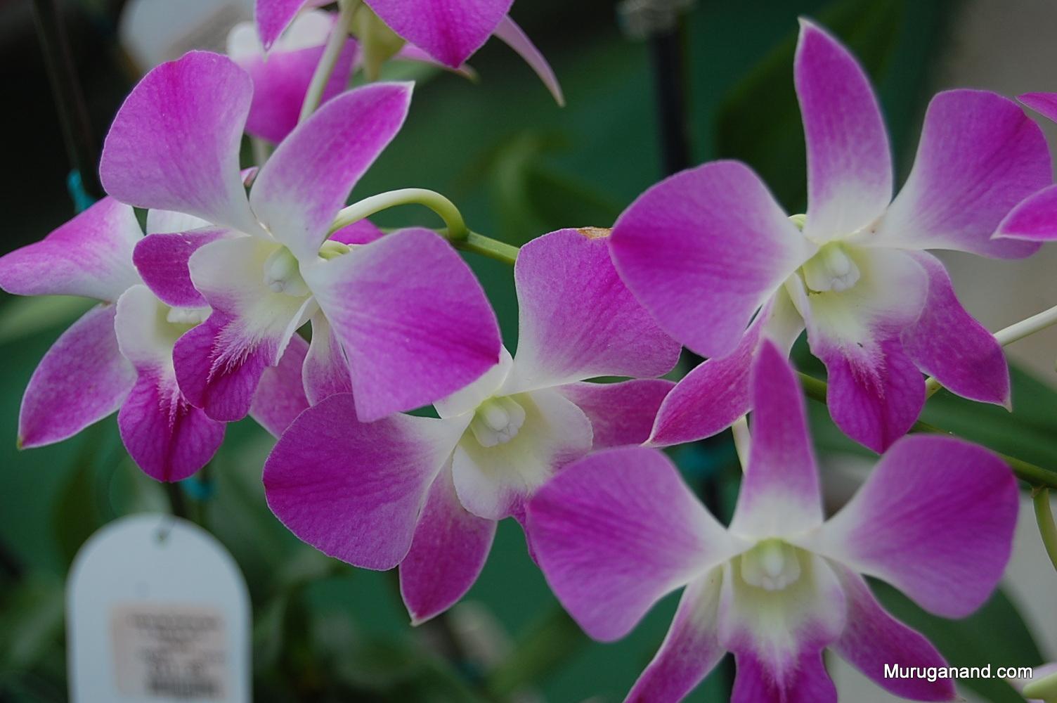Orchid Gardens (Hilo, Hawai'i)