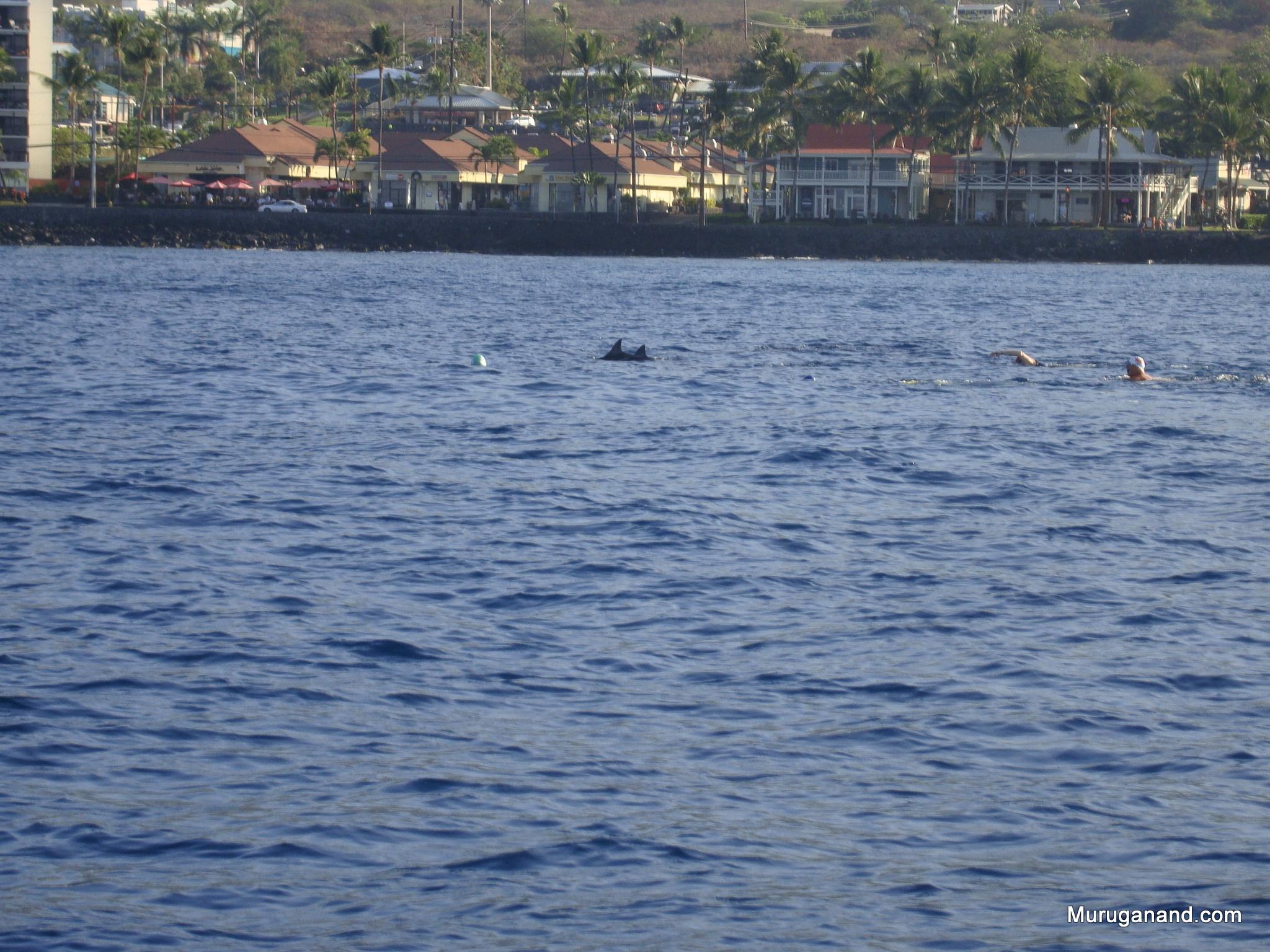Dolphins while Rafting (Kona, Hawai'i)