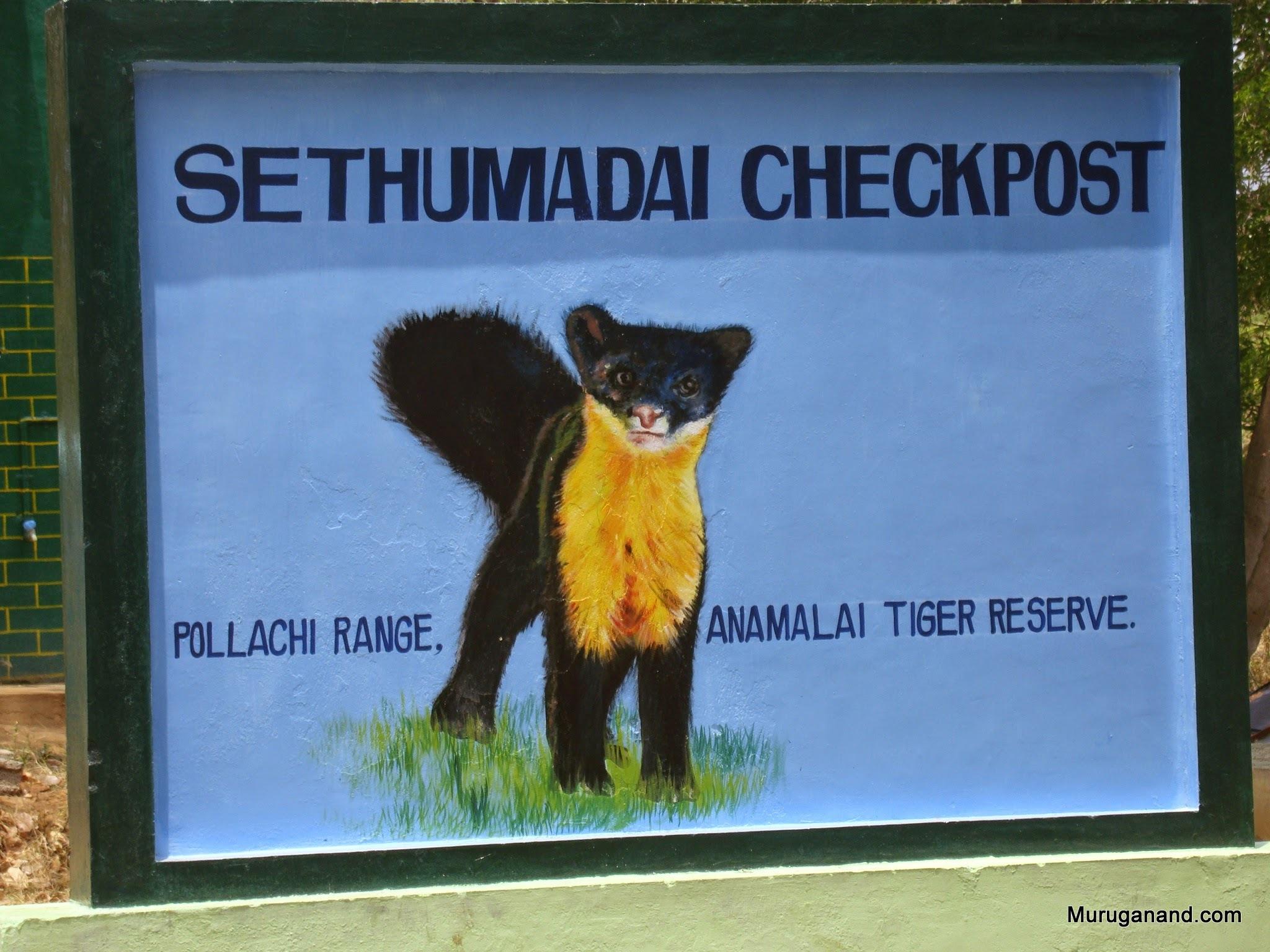 Nilgiri Marten, a weasel like animal