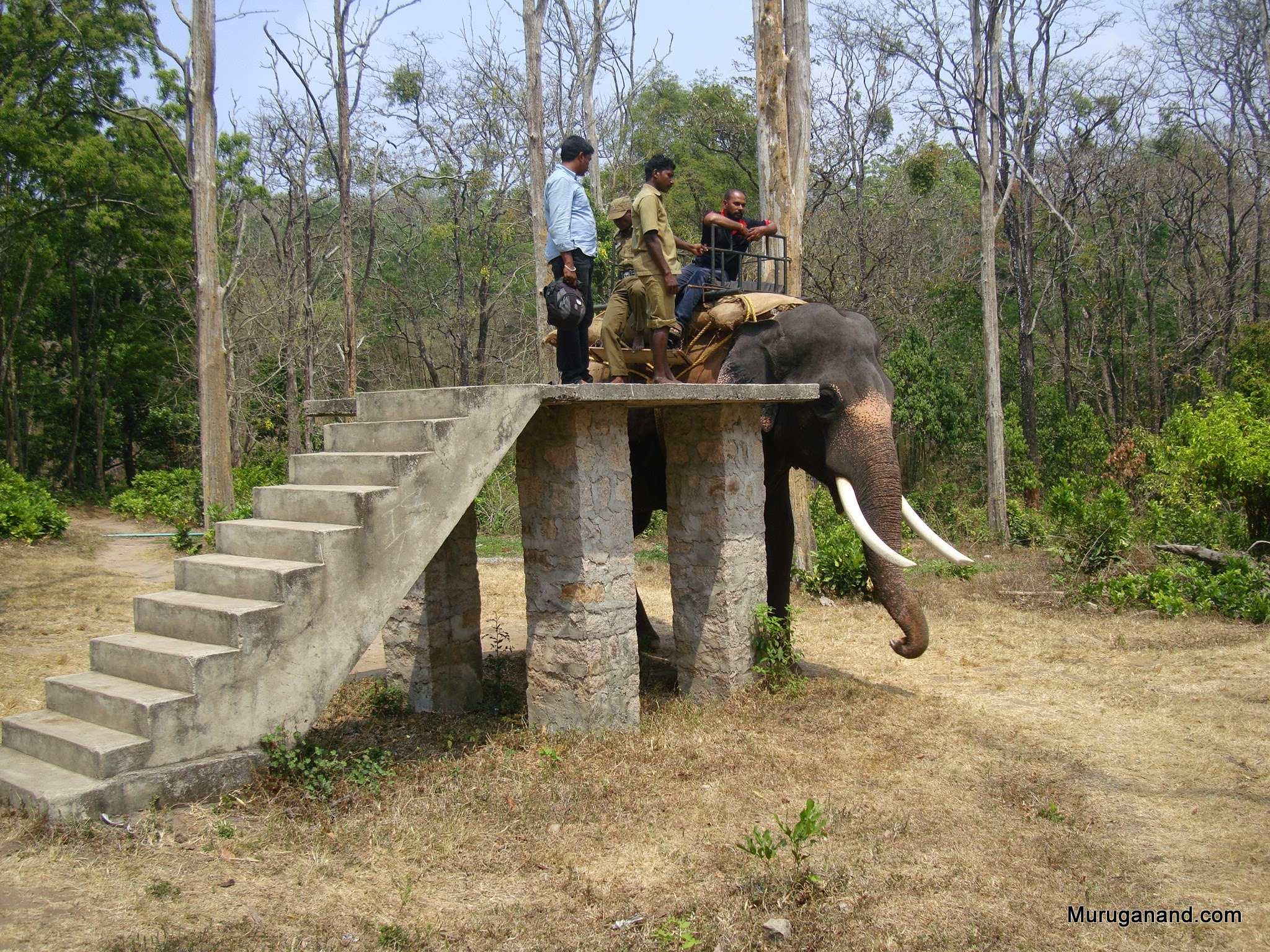 Topslip Elephant Safari-Platform to board