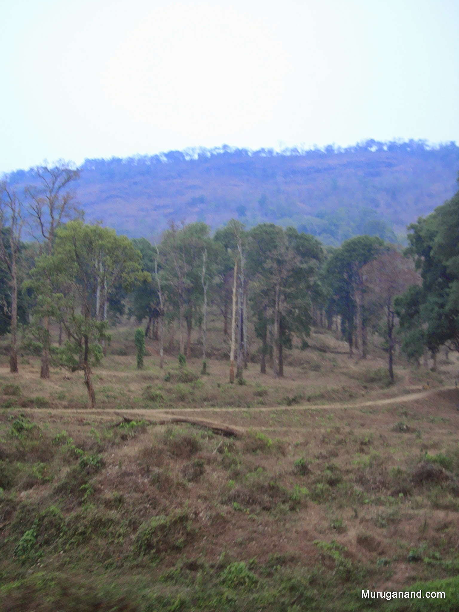 Forest atmosphere is real change of scenery for urban folks