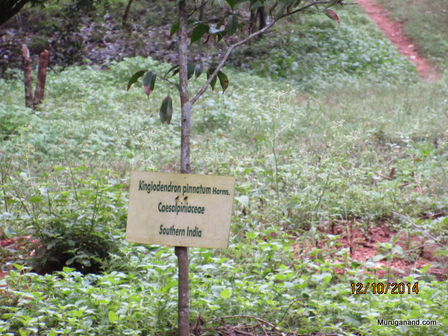 The resin from the tree is sambrani- I didn't know before because...