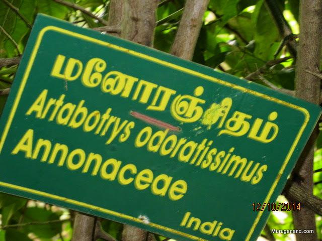 Fragrant Manoranjitham