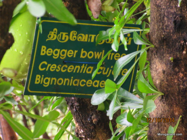 Tiruvodu- begging bowl can be made from the nut/fruit