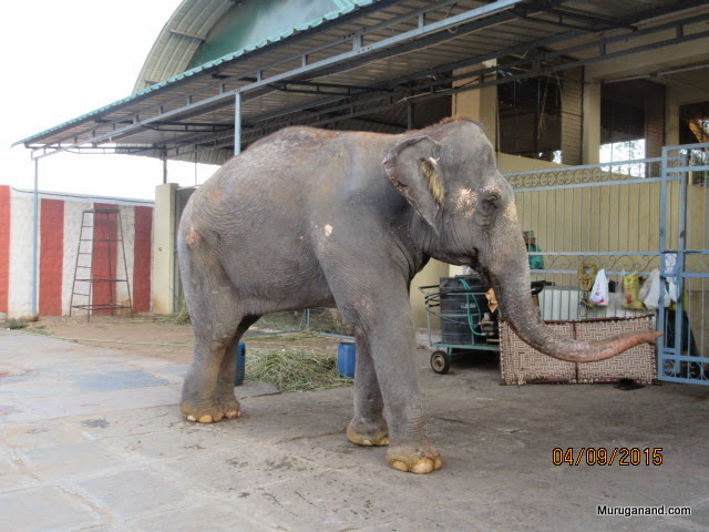 In one side, Temple Elephant shelter and book store are located