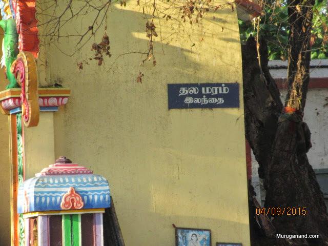 Third side of Prakaaram contains the temple tree (Sthala Viruksham), Ilandai