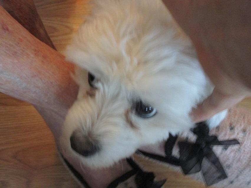 Sophie on Moms foot