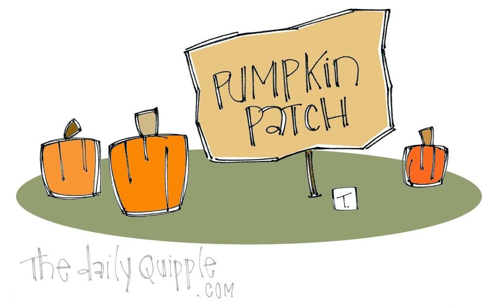 Pumpkins in a pumpkin patch.