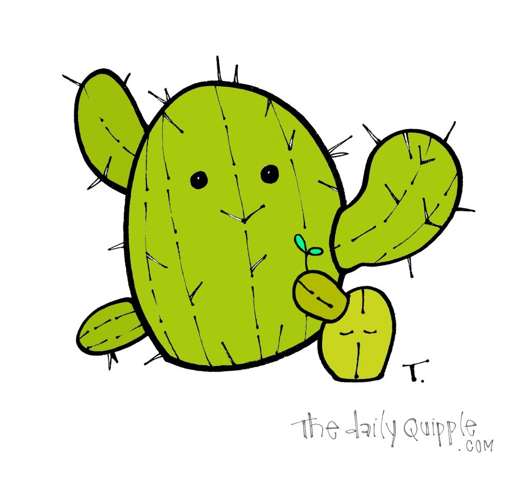 A big and a little cactus.