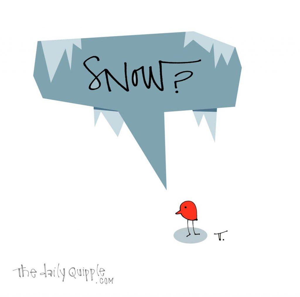 Snow Bird | The Daily Quipple
