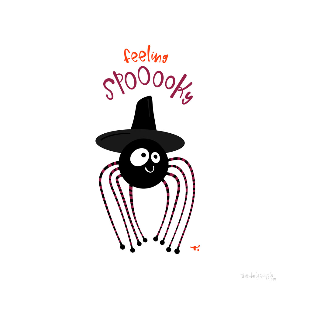 Spooky Spider   The Daily Quipple