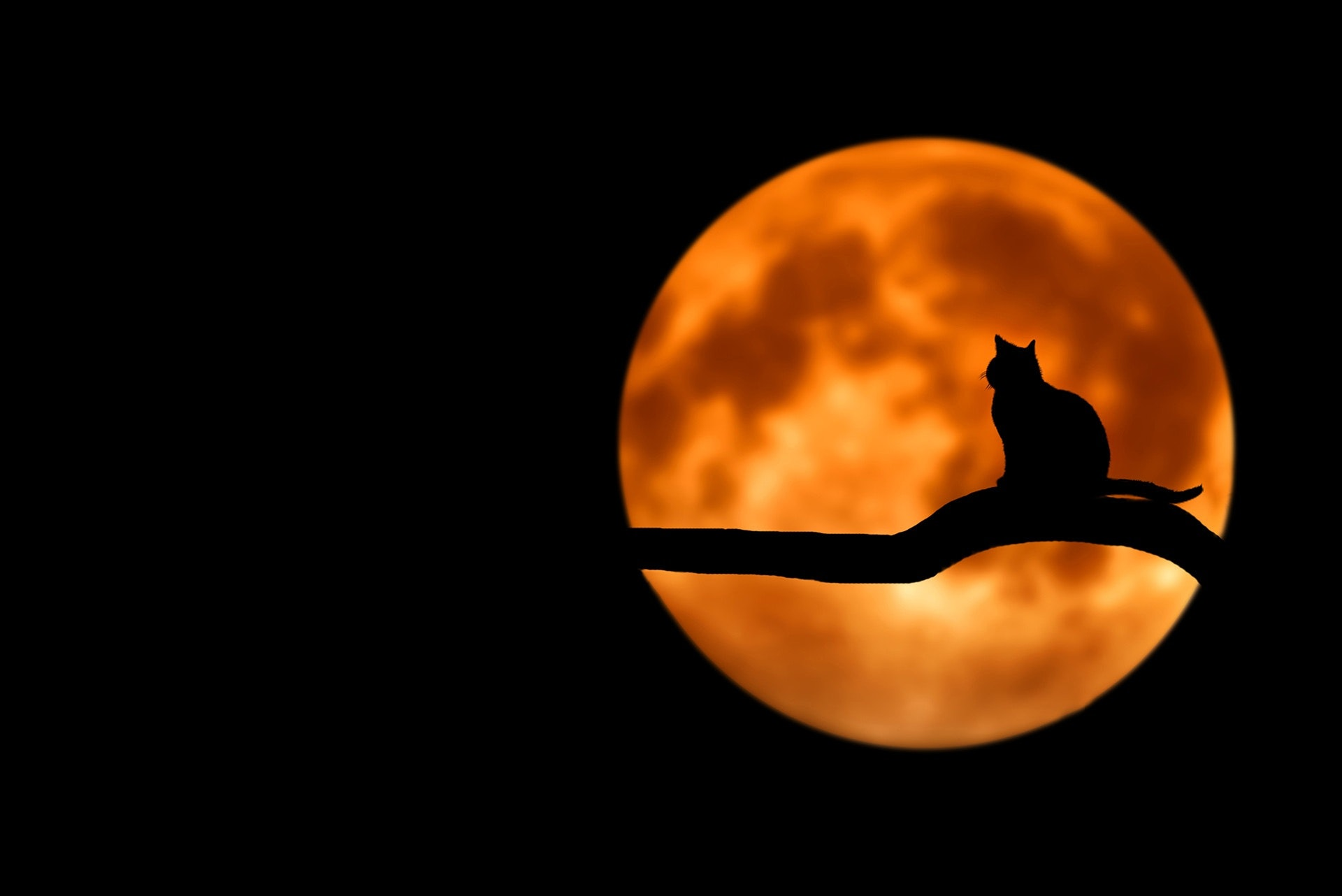 Why Your Business Should Celebrate Halloween This Year