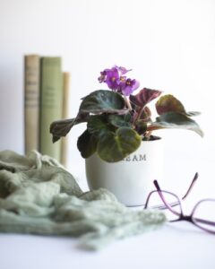 african violet - grow plant in water
