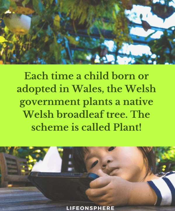 Plant for every kid born in the welsh community