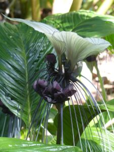 bat flower spooky plant halloween