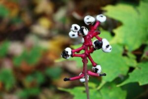 dolls sye spooky plant halloween
