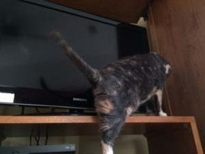 Janet helpfully demonstrating how a cat could climb behind the TV and get stuck