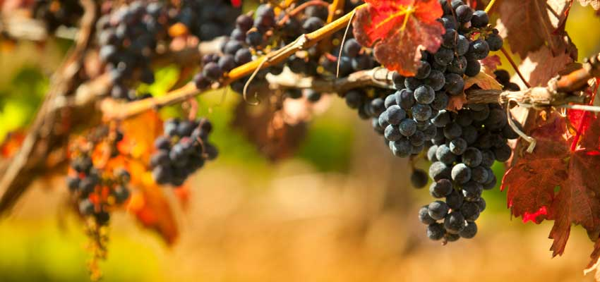 pentwater, michigan, oceana county wineries and vineyards